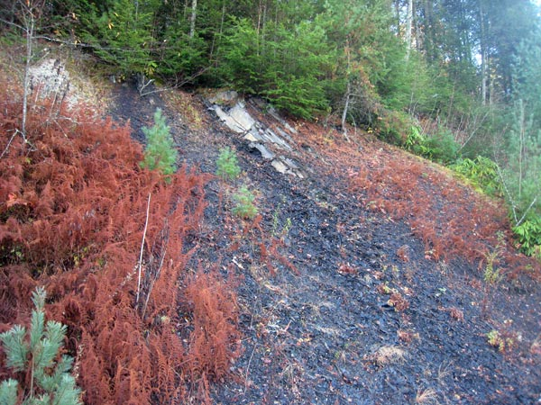 Pictures of the Marcellus Shale formation outcrop - WV Surface